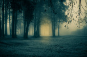 A spooky scenery of a trees. Halloween themed landscape. Foggy morning during the first snow.