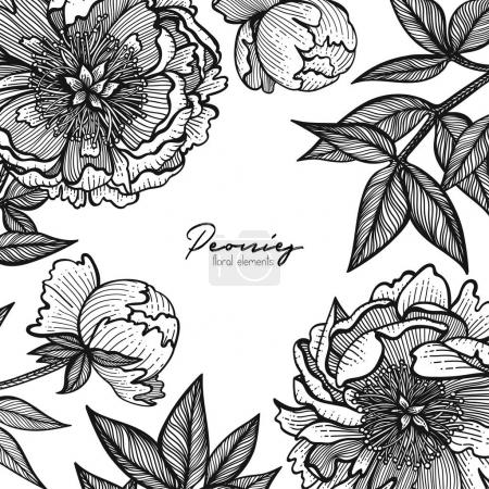 Graphic detailed frame with peony flowers and leaves. Vector illustration painted with clear lines. Romantic design template for cards, business cards, posts in social networks, inspirational quotes.
