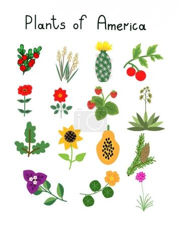 Plants of America