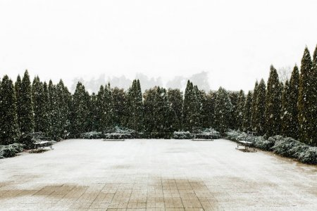 Empty yard surrounded by tree, around it's snowing.