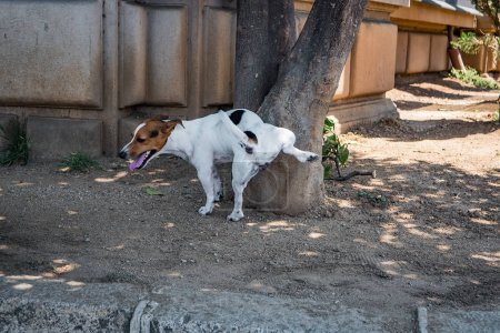 Photo for Dog pisses on tree in summer day - Royalty Free Image