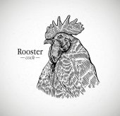 Rooster head in graphic style Illustration drawn by hand on paper and converted to vector