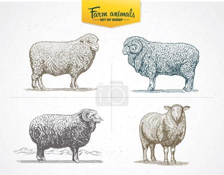 sheep in graphic style