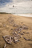 dead fishes on the beach