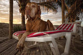 dog laying on a beach chair