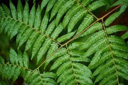 Foto de Hermosos helechos hojas de follaje verde, fondo natural fern floral - Imagen libre de derechos
