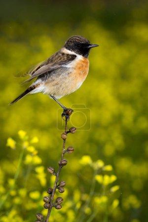 bird on slim branch