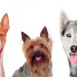 Group of cute dogs isolated on white background...
