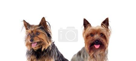 Beautiful little dogs