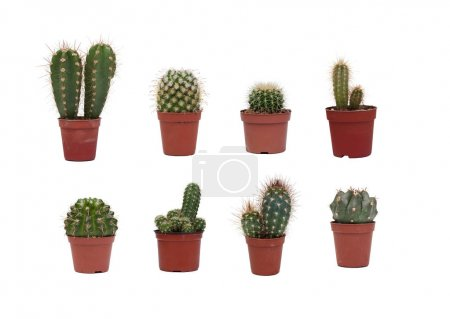 Eight different cactus plants