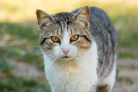 Beautiful free cat outdoors