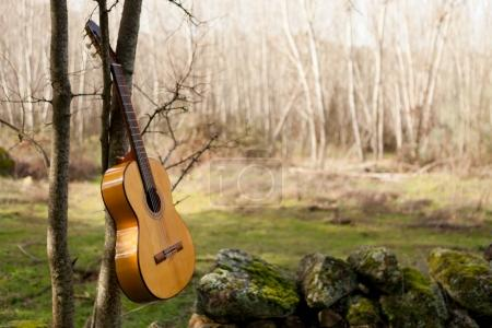 Classical guitar hanging on tree