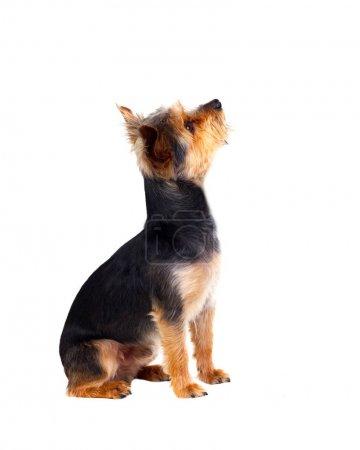 Cute small dog