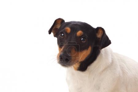 Beautiful small dog