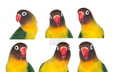 Portraits of colorful parrots