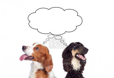 studio portrait of two cute different dogs with speech bubble isolated on white background