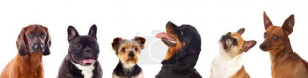 cute different dogs isolated on white background