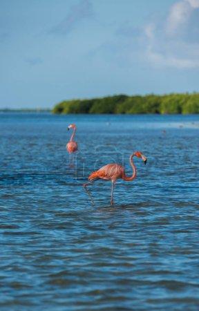 Flamingoes at Rio Lagartos Biosphere Reserve