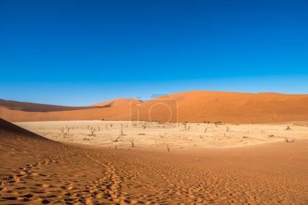 Photo pour Camelthornes morts et dunes rouges à Deadvlei, Sossusvlei, Namib-Naukluft National Park, Namibi - image libre de droit
