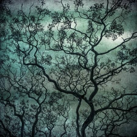 Photo pour Image grunge de la sombre forêt, décor halloween parfait - image libre de droit