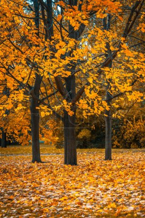Autumn trees in the park,