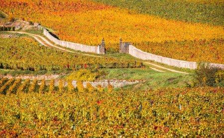 Beautiful landscape shot with bright orange vineya...