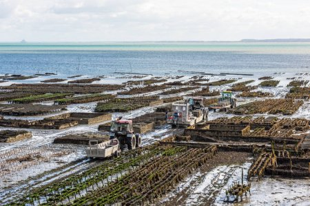 Oyster farms in Cancale, Brittany, France