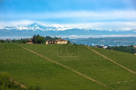 Vineyards of Langhe, Piedmont