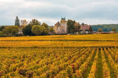 Castillo con viñedos en la temporada de otoño, Borgoña, Francia