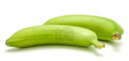Plantain (green banana) isolated