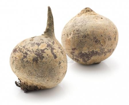 Beetroot (red beet) isolated on white background two raw bulb