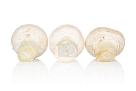 Group of three whole fresh white champignon isolat...