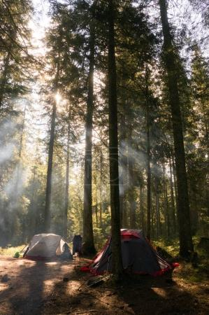camping in forest with backlit