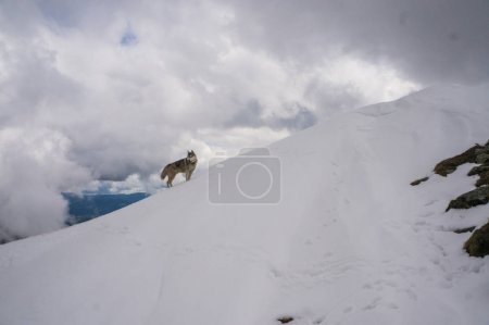 Dog in snowy mountains