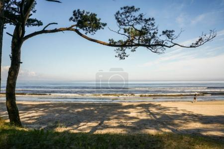 Photo for Beautiful landscape with one tree on coastline, Estonia, Tallinn - Royalty Free Image