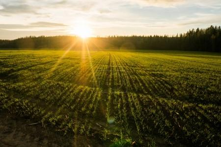 Foto de Spring field at sunrise with back light, Belarus, Lahoysk - Imagen libre de derechos