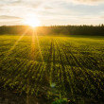 Spring field at sunrise with back light, Belarus, ...