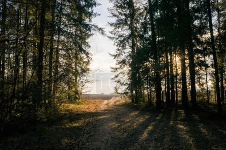 trees in forest on sunset