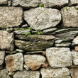 Close-up view of stone wall and green plants growi...