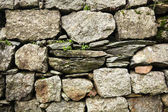 close-up view of stone wall and green plants growing through stones in Indian Himalayas, Dharamsala, Baksu