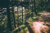 beautiful green trees and footpath in Indian Himalayas, Dharamsala, Baksu