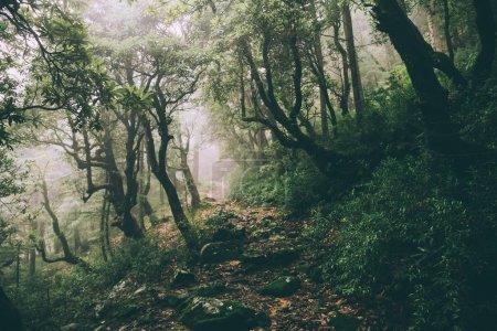 Photo pour Beaux arbres majestueux et sentier rocheux dans l'Himalaya indien, Dharamsala, Baksu - image libre de droit