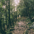 Beautiful trees and rocky footpath in Indian Himal...