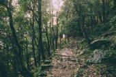 beautiful trees and rocky footpath in Indian Himalayas, Dharamsala, Baksu