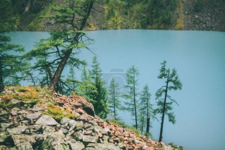 fir trees growing on rocks near beautiful calm mountain lake in Altai, Russia