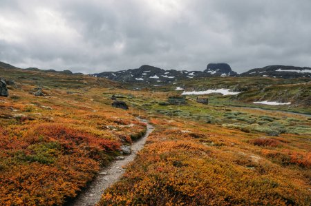 Photo for View of field with orange and green plants and rocky hills on background, Norway, Hardangervidda National Park - Royalty Free Image