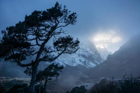 tree and evening sky with sunlight, Nepal, Sagarmatha, November 2014