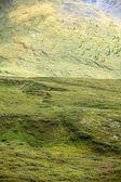 """Постер, картина, фотообои """"живописный вид на горы, покрытые зеленой травы и растения, Алтай, Россия"""""""