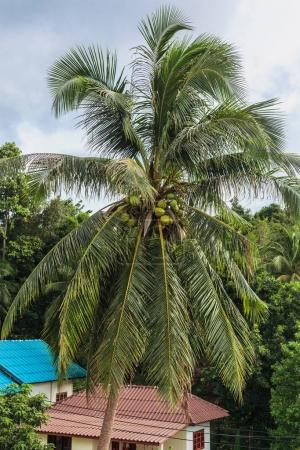 landscape with palm tree and houss in forest