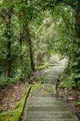 """Постер, картина, фотообои """"живописный вид пустой шаги и деревьев с зелеными листьями вокруг, Бали, Индонезия"""""""